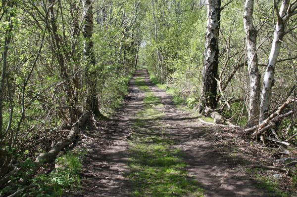 skogssti2